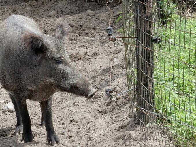 Wildschweinzaun An Deutsch Danischer Grenze Wird Errichtet