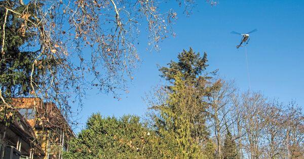Kletterausrüstung Baum Fällen : Spektakulärer einsatz im himmel über hoheneck stadt ludwigsburg